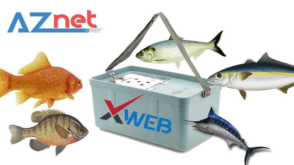 Website bán hàng chính là cái xô đựng cá